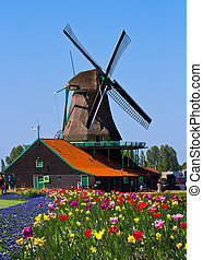 windmill in holland - Photo of windmill in Holland with blue...