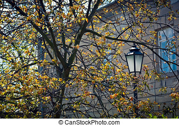Old lantern - Old iron lantern in the branches