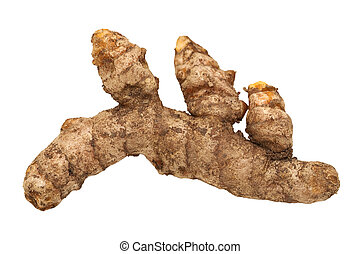 Fresh Turmeric Root Isolated with clipping path