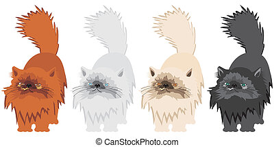 persian cats on white background