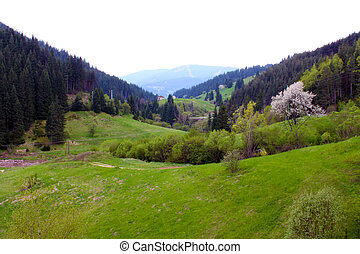 Meadows, trees, mountains and fresh green grass