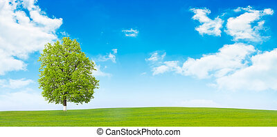 One tree in the field - Nature background - Field,tree and...