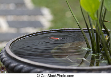 fish pond - a fish creating ripple on the surface of the...