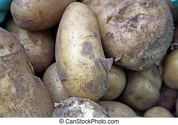 home grown potatoes - sack of potatoes