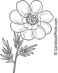 Flower adonis, contours - Vector, flower adonis outline,...