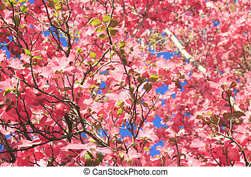 Up a Pink Tree