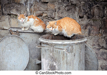 Two Stray Cats on Garbage Bins - Two stray cats sit on...