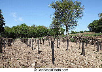 Reforestation Of Pine Plantations - In reforestation rows of...