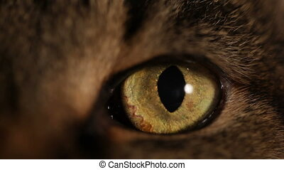 HD: extreme close-up of a cat's eye