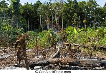 jungle deforestation - tropical rainforest deforestation in...