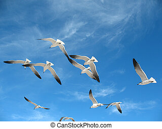 Seagulls in a blue sky