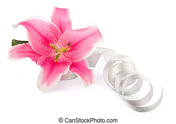 Beautiful pink lily flower isolated on a white background...
