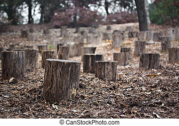 Many stumps in autumn forest with shallow depth of focus