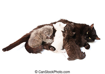 kittens and mother - Funny playful little kittens on white...