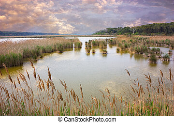 marshland - marsh with reeds and rushes under a cloudy sky -...