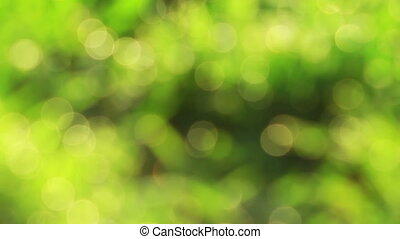 Nice green nature foliage bokeh