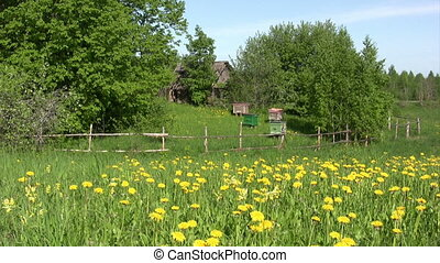 Summer landscape - Landscape with beehives, old house and...