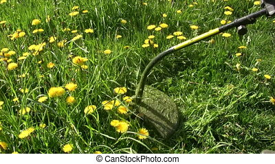 Weed trimmer - Moving grass in summer garden