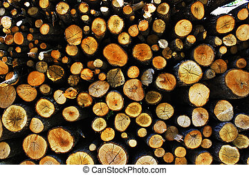 Tree trunks - Large pile of tree trunks