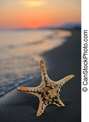 summer beach sunset with star on beach representing freedom...
