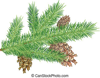 Cones on branch - Three cones on christmas tree branch....