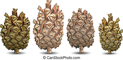 Four pine cone - Four pine cones isolated on white...