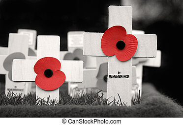 In Remembrance - Crosses placed in Remembrance of those who...