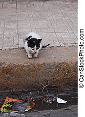 Cat in  Algiers Algeria - Stray Cat in Algiers Algeria