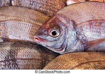 Bream - Fresh sea bream for sale at a fish market