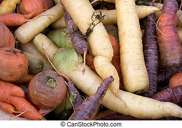 Carrot varieties horizontal - Muilti coloured carrots for...