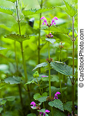 wild plant - plants for natural background, fluffy wild...