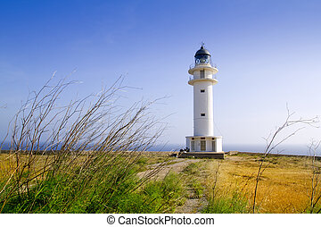 Barbaria berberia cape lighthouse Formentera meadow -...