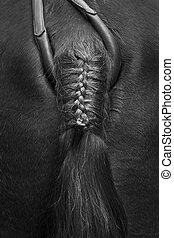 Artistic black and white horse's tail detail - Artistic...