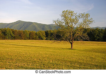 Scenic Cades Cove Vista, Great Smokey Mountains National...
