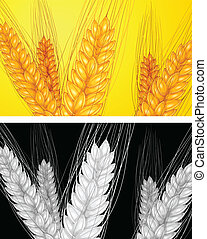 ear wheat background - ear wheat ripe yellow, agricultural...