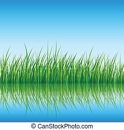 Nature background, green grass reflected in water, vector.