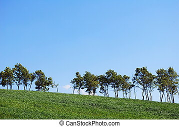 Tree line - Line of green trees behind wheat field