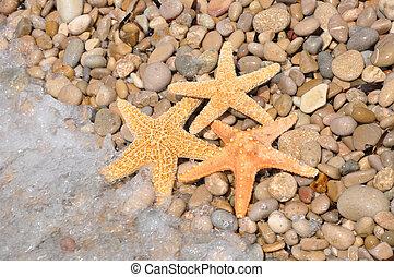 Starfish on Beach Shore