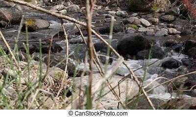 Bubbling mountain creek