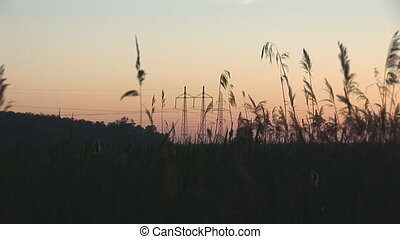 sunset power line 7