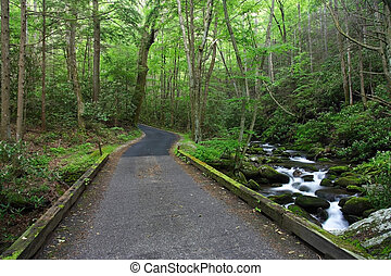 Roaring Fork Motor Nature Trail, Great Smokey Mountains...