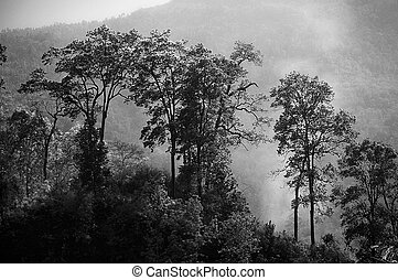 Mystic forests - Backlit Himalayan forests in early morning...