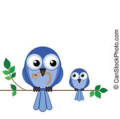 madre, pájaro