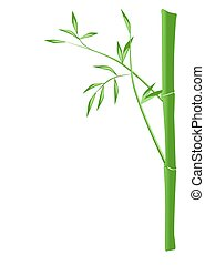Bamboo - Illustration of a bamboo stick