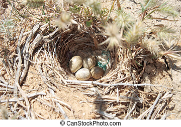 Nest in the steppe.