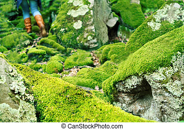 Mossy large rocks in the forest and walking woman
