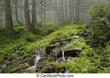 creek in wild wet Carpathian forest