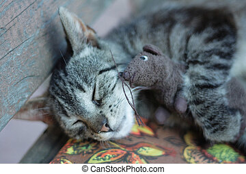 cat and the mouse toy - cat and the her mouse toy are...