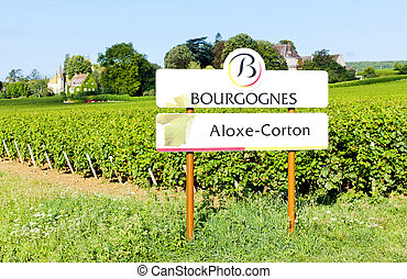 vineyards of Aloxe-Corton, Burgundy, France