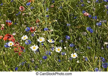 Field flowers - Flowers field: chamomile, poppy, cornflower...